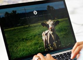 品牌设计-岳源旅游农业