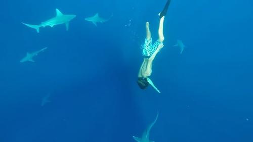 冲浪板上的公益:若鲨鱼不慎夺我性命,请不要再伤及它们生命